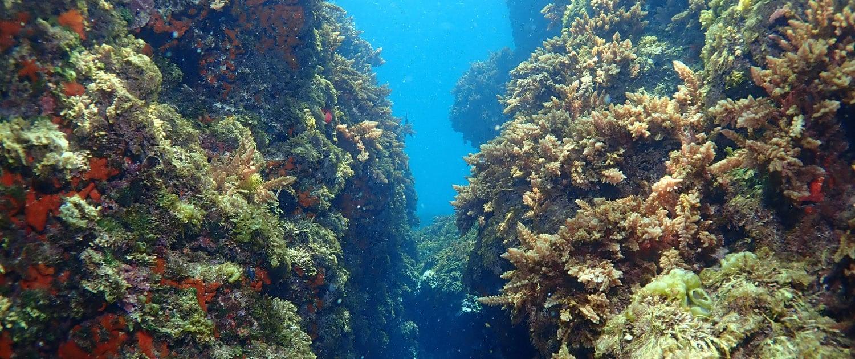 Buceo en Cabo de Palos